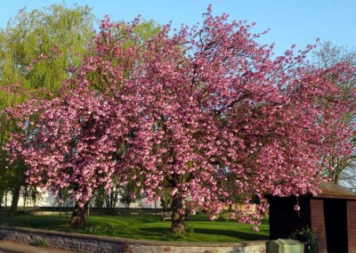 Village Green in bloom